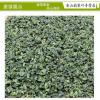 安溪秋茶浓香型消青高山铁观音 2017年乌龙茶微供热销