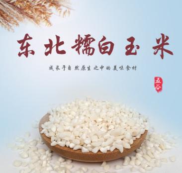 白糯玉米渣 玉米碎糯玉米糁玉米粒 白玉米渣