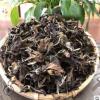 2013年福鼎枣香老白茶 500g散装茶叶 高山日晒茶 厂家直供批发