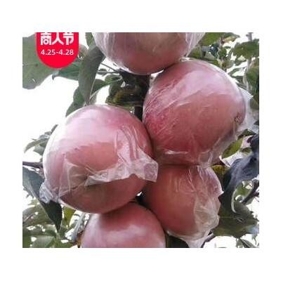 陕西纸加膜红富士苹果当季新鲜水果脆甜多汁18枚整箱一件代发