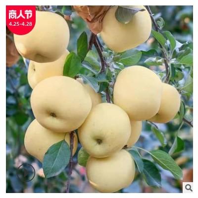 烟台奶油富士苹果新鲜水果现货批发刮泥沙苹果粉面黄元帅整箱批发