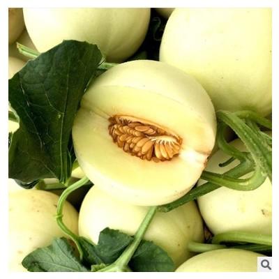 【头茬陕西阎良甜瓜】新鲜10斤整箱水果当季非云南小香瓜蜜瓜