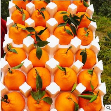 【四川耙耙柑】春见水果柑橘甜柑非不知火丑八怪橘子一件代发