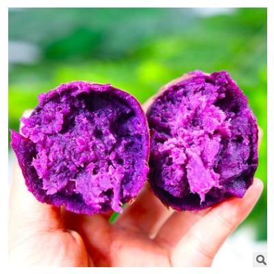 【沙地紫薯】新鲜紫罗兰紫薯紫心番薯粗粮香甜软糯