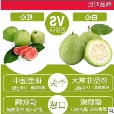 5斤可包邮广西番石榴红心/白心芭乐新鲜水果