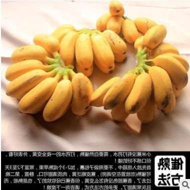 广西新鲜小米蕉带箱10斤香蕉芭蕉海南帝王蕉banana水果苹果粉蕉3