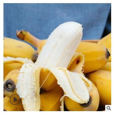 【广西苹果蕉】香蕉新鲜应季水果当季小米蕉青香蕉5斤9斤一件代发