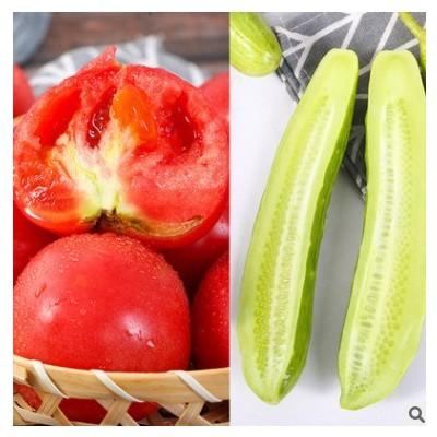 普罗旺斯西红柿和白玉黄瓜 农家现摘新鲜蔬菜青瓜水果5斤一件代发