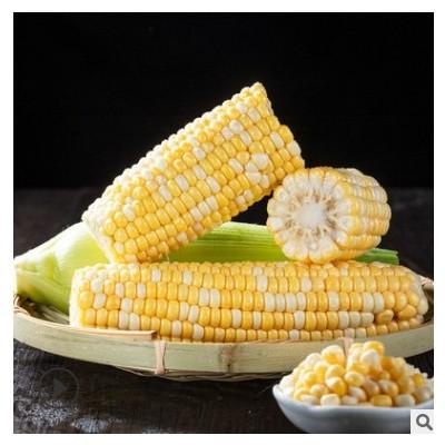 云南水果甜玉米 新鲜现摘整箱爆浆 应季蔬菜可生吃5斤9斤一件代发