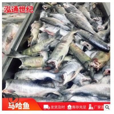 青岛马哈鱼厂家供应鱼块 冷冻去头去内脏马哈鱼肉