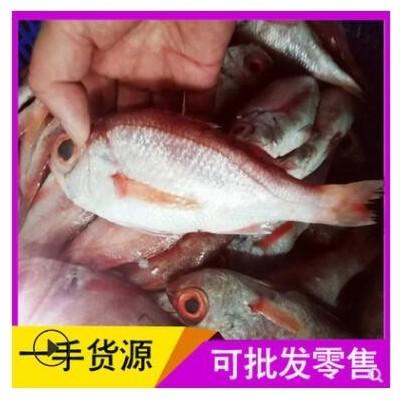 海鲜批发红果鲤新鲜鲜活赤鯥鱼生鲜量大从优速冻日料刺身喉黑鱼