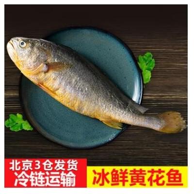 舟山冰鲜黄花鱼 冷冻海鱼酒店食材生鲜海鲜水产新鲜大黄鱼批发