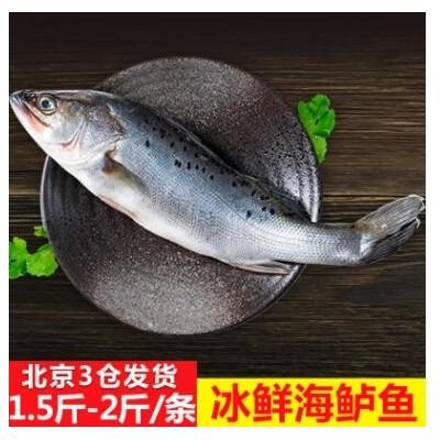 冰鲜海鲈鱼整条海鲜批发 清蒸香煎烤鱼酒店餐饮食材南海鲈鱼